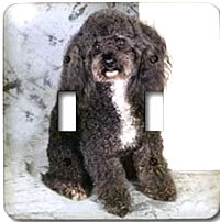 Color photograph of black Toy Poodle on a double toggle light switch